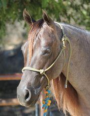 Rope-Halter - Chocolate-Turquoise